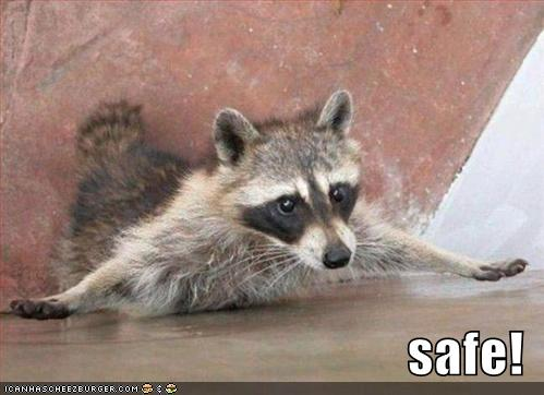 funny-pictures-raccoon-baseball-safe.jpg