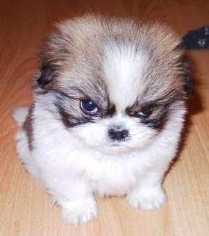 angry-puppy.jpg